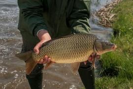 Sikeresen befejeződött a haltelepítés az állami tulajdonú horgászvizeken